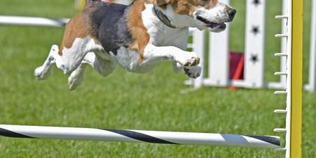 Dog Agility | Dog Park | Paw Park