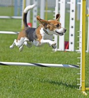 Hillsborough Paw Park to Have Agility Equipment