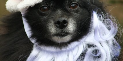 SPCA Tampa Bay | Pet Walk | Events Near Me