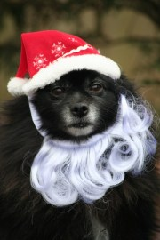 Registration Is Still Open for the SPCA Pet Walk