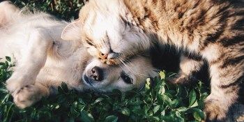 Pinellas Animal Services | Pets | Dogs and Cats