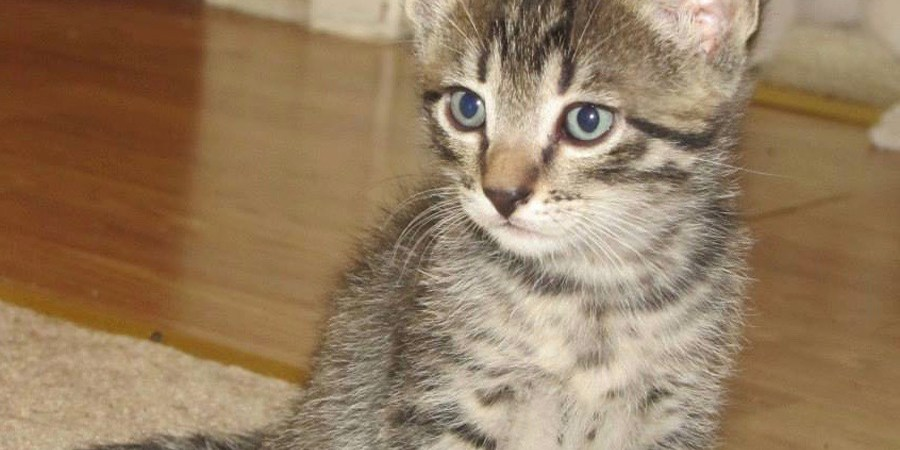 Sassy Sandpiper | Cat | Columns