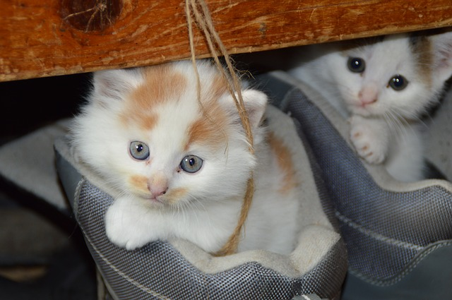 Cats | KIttens | Animal Rescue