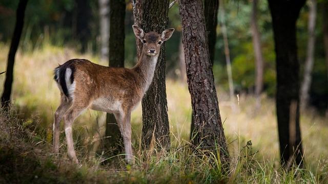 Forest | Deer | Florida Forest Service