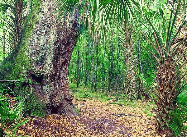 Starkey Wilderness Park | Pasco County | Places to Go