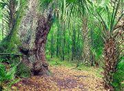 Starkey Wilderness Park to Reopen