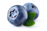 Everything's Blueberry in Brooksville