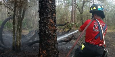 East Lake Fire Rescue | Fire Prevention | Wildfires