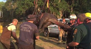 Horse Rescue | Hillsborough Fire Rescue | Trapped Horse