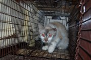 Reducing the Feral Cat Population One Cat at a Time