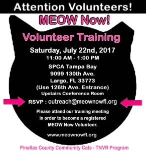 Meow Now | Volunteer Training | Things to Do