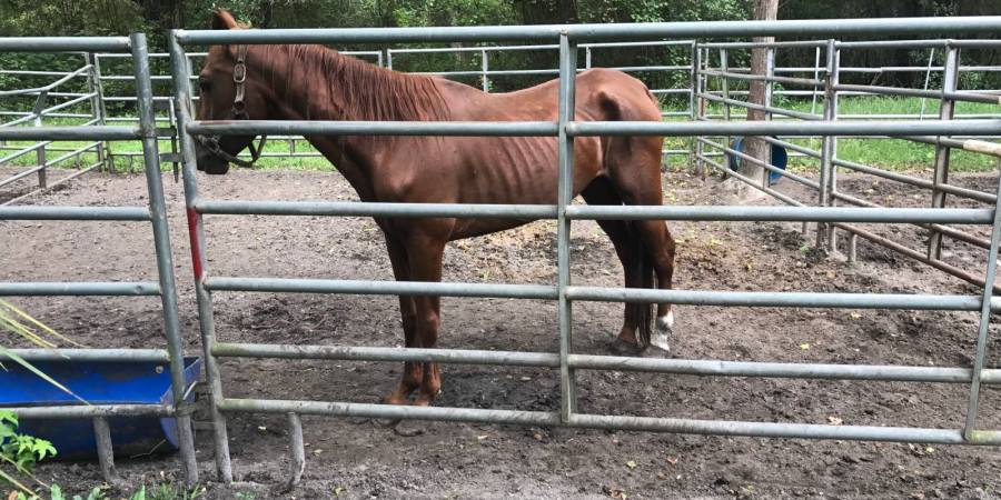 Crime | Hernando Sheriff | Neglected Animals