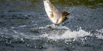 Fishing | Sports | Things to Do