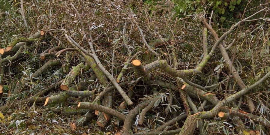 Trees | Storm Debris | Hurricane