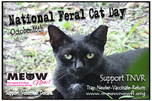 Meow NOW | National Feral Cat Day