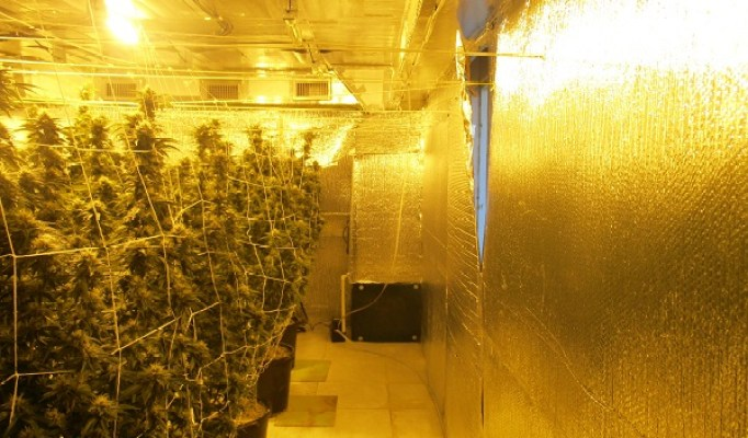 Grow House Bust | Hillsborough Sheriff | TB Reporter