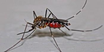Mosquito | West Nile | Sentinel Chicken