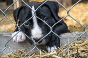 Crist Proposes Crackdown on Puppy Mills
