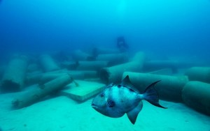 Gulf Gray Triggerfish | Fishing | Sports