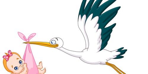 Stork | Birth | Baby