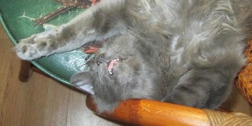 Thomas   Sassy Sandpiper   Cats