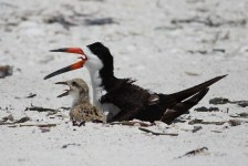 Seabirds | Wildlife | Birds