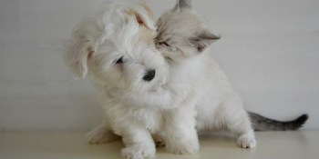 Pets | Animals | Dogs and Cats