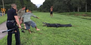 Alligator   Clearwater Police   Wildlife