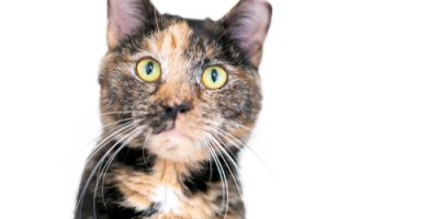 Feral Cat | TNVR | Ear Tip
