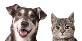 Pets   Animal   Dogs and Cats