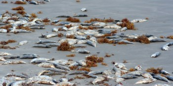 Red Tide | Environment | Algal Bloom