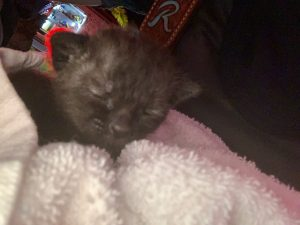 Kittens Saved | Pasco Fire Rescue | Public Safety