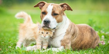 Pets   Animals   Puppies and Kittens
