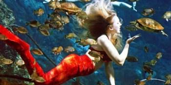 Weeki Wachee Mermaid | Parks | Places to Go