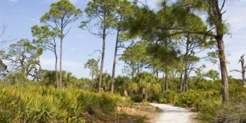 Caladesi Island | State Park | Recreation