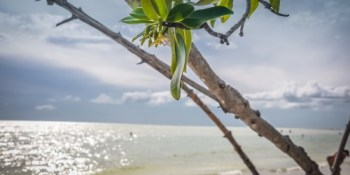 Fort De Soto Park | Places to Go | TB Reporter