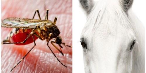 Eastern Equine Encephalitis | Mosquitoes | Horses