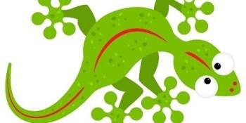 Gecko | Geckofest | Gulfport