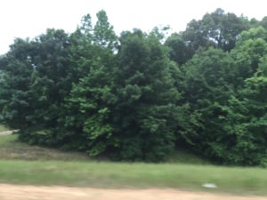 MS from the highway