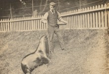 Dublin Zoo and the 1916 Rising