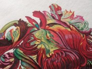 Tulipa Monstrosa Rubica Maior