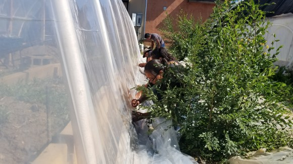 Greenhouse Repair