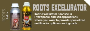 roots_excel