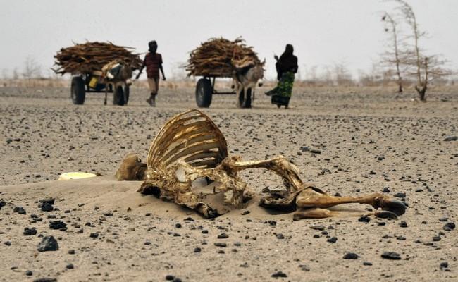 Les damnés de la terre: 2018, l'année de tous les dangers au Tchad, une vague de forte chaleur s'invite pour mettre à rude épreuve nos corps affamés