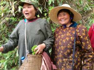 two-tea-pickers