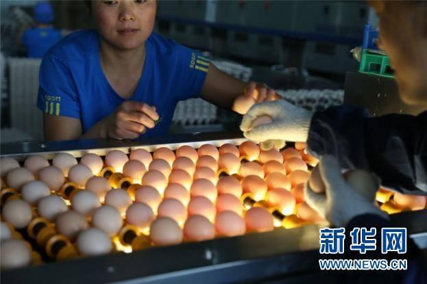 จีนเริ่มขายไข่ไก่ออนไลน์เป็นครั้งแรกของประเทศ