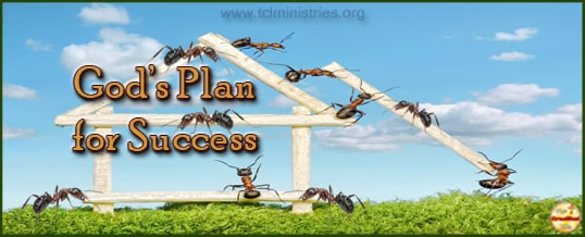 Go To The Ant – How to be Successful