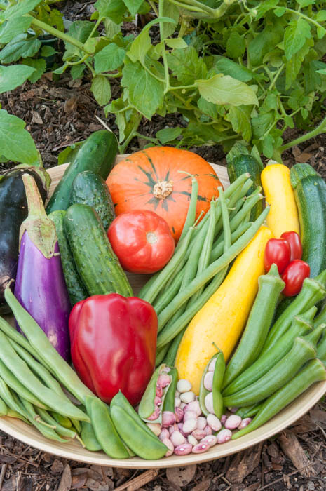 the milder days of fall create an ideal gardening environment for both garden and gardener now is the time to plant cool season vegetables - Fall Vegetable Garden