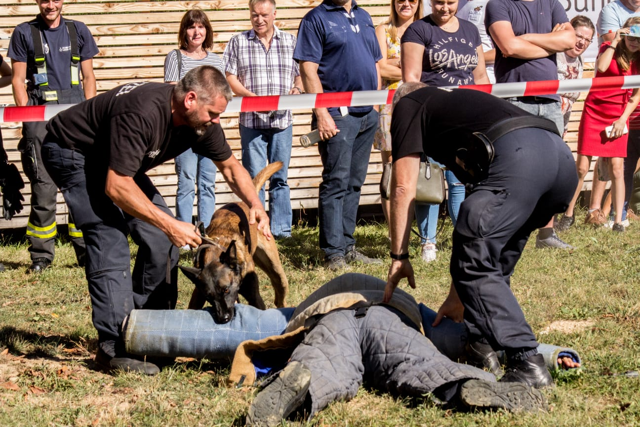 Ausbildung von Schutzhunden