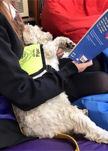 Paws and Read - Therapy Dogs Nationwide